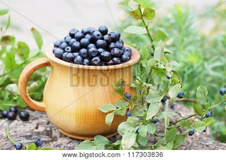 Forest blueberries on a large rock