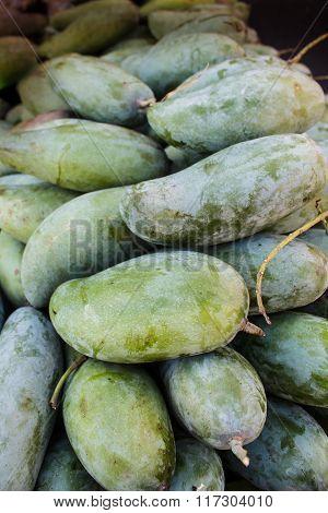 Mangifera Indica, Fresh Mangos.