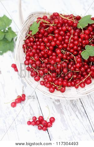 organic red currants on white
