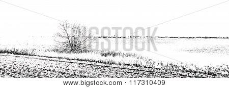 Reed and tree along a lake