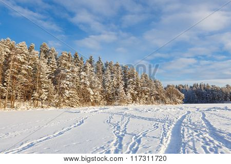 Frozen lake and snow covered forest