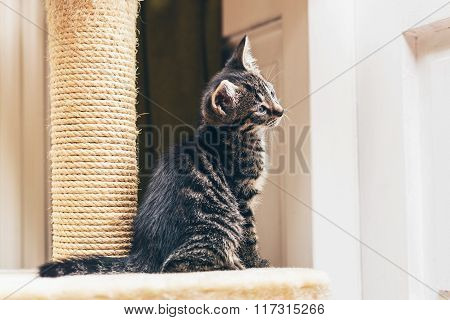 Curious Kitten Watching Something With Tilted Head