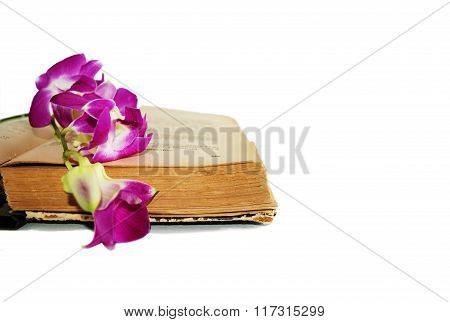 Old book and Orchid on white background, isolate