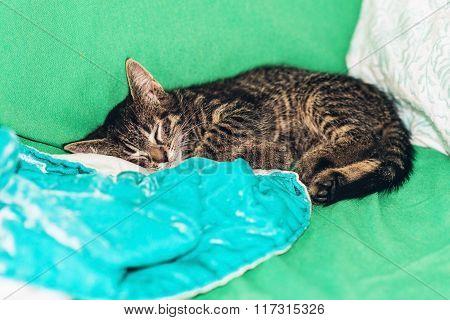 Cute Little Tabby Kitten Fast Asleep