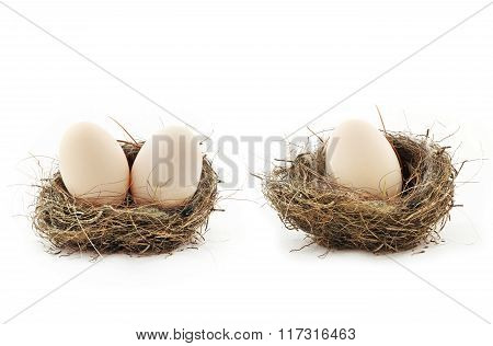 Eggs Inside The Nests