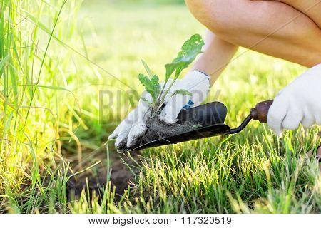 Cute Gardener With Seedling