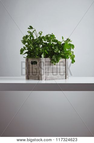 Wooden Box Parsley Cilantro Isolated Table