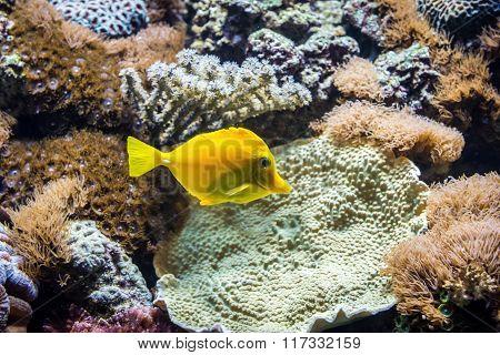 Fish In Aqarium
