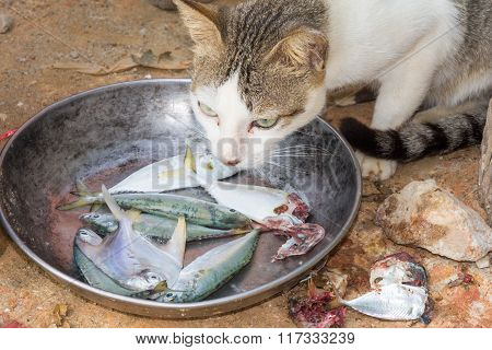 Cat Eating Fish