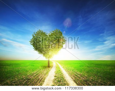 Lonely tree in field with shape from heart