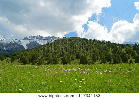Green Meadow With Snowy Mountains On Background