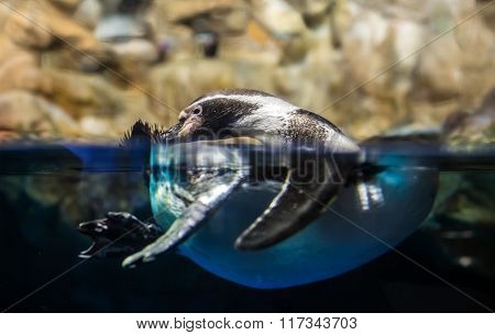 Penguin In Aquarium