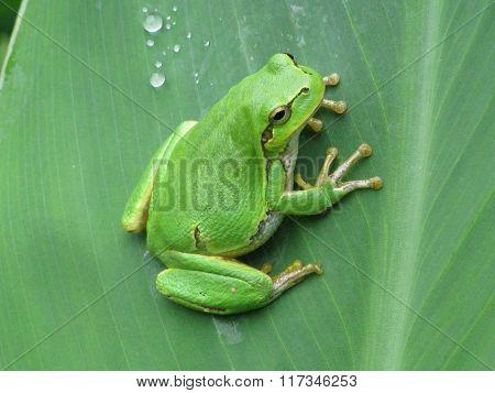 Frog on a flower petal
