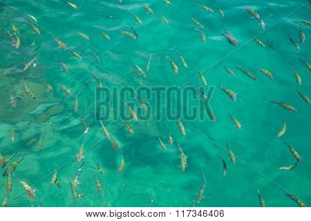 Coral fish in the Andaman Sea off the coast of Thailand