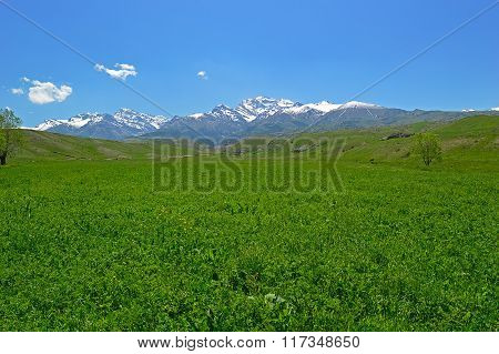 Green Meadow With Snowy Mountains In Background