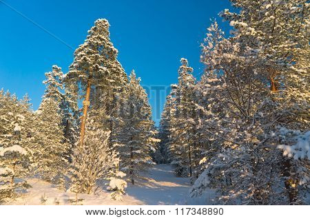 Icy Forest Wintry Landscape
