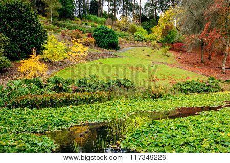 Autumn Park By The Pond
