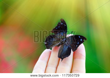 Beautiful colorful butterfly sitting on female hand, close-up