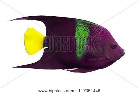 small purple spotted fish isolated on white background