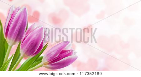 Holiday Nature Floral Background
