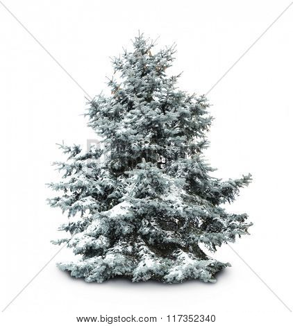 Fir-tree with snow, isolated on white