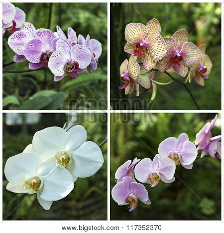 Collage with beautiful orchid flowers in the garden.