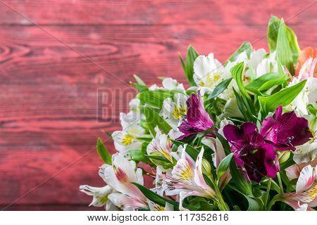 Fresh Alstroemeria Flowers On Wooden Background