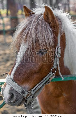 Horse Head Close-up Animal portrait