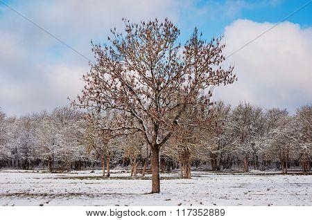 Winter Scene With Trees