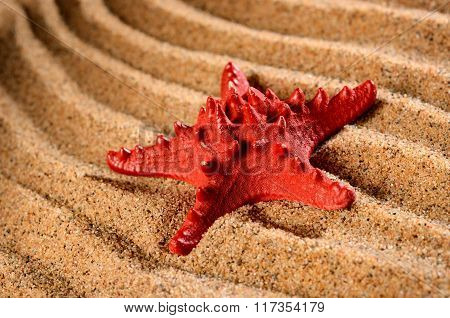 Red sea star on the sandy beach