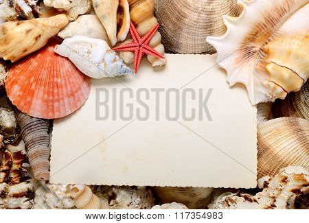 Blank postcard In Sea Shells Frame