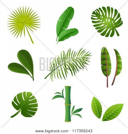 Tropical plants set. Vector illustration of green leaves of Strelitzia, banana, monstera, frangipani, bamboo and other tropical plants