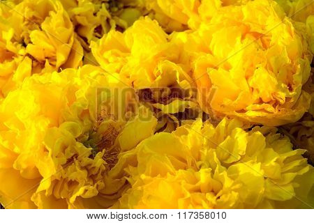 Yellow Silk Cotton Or Butter-cup Flowers Nature Abstract Background