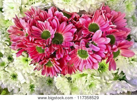 pink flower daisy photo texture