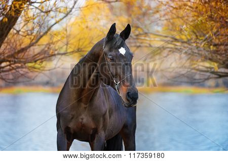 Portrait of beautiful black horse in a landscape of the river and the trees very much.