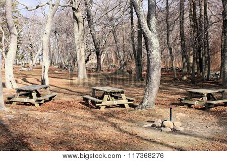 Picnic Tables Three
