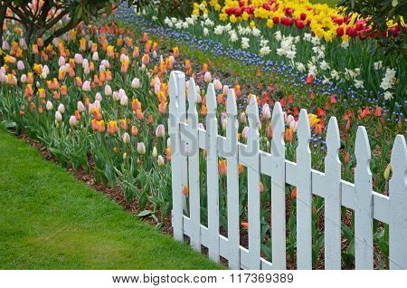 Colorful Spring Tulips Garden