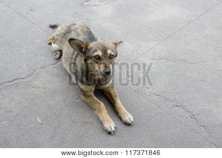 dog lying on the pavement