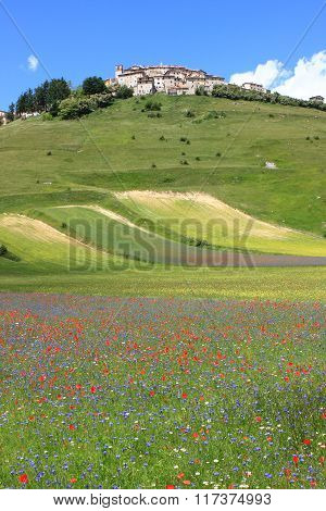 Castelluccio di Norcia during the flowering season