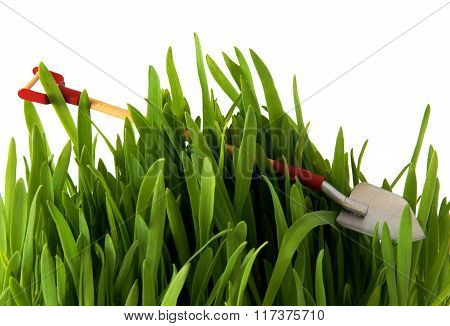 Shovel On Green Grass