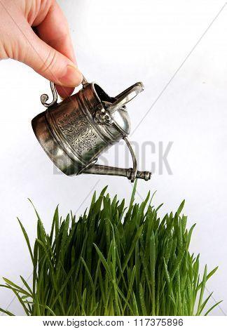 Human Hand Watering Green Grass