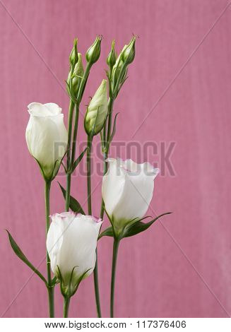 White lisianthus flowers on a pink timber background