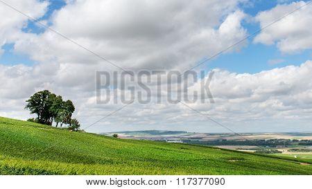 Summer landscape, Montagne de Reims, France. Header for website
