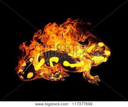 Burning Fire Salamander