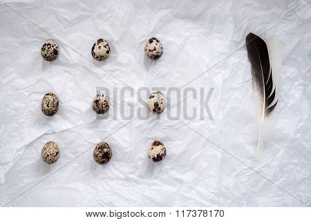 Quail Eggs Flat Lay Still Life With Food Stylish