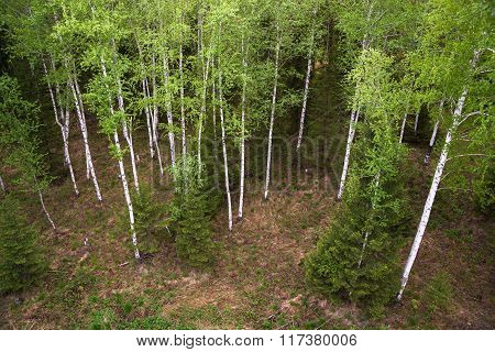 green forest, view from above