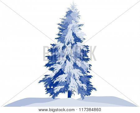 illustration with winter fir isolated on white background