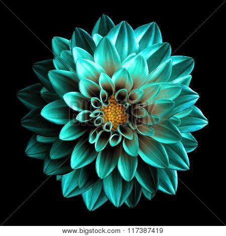 Surreal Dark Chrome Turquoise And White Flower Dahlia Macro Isolated On Black