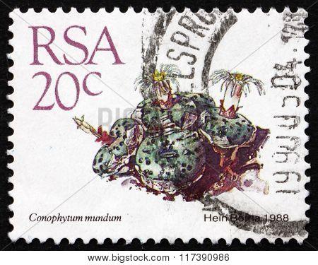 Postage Stamp South Africa 1982 Conophytum Mundum, Succulent Pla