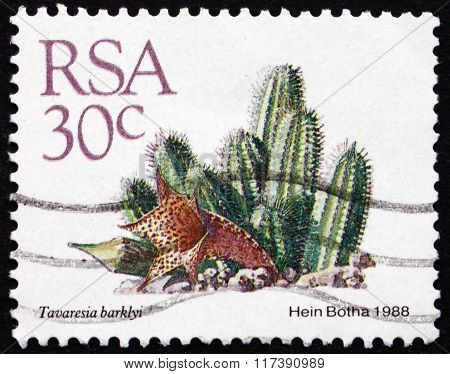 Postage Stamp South Africa 1982 Tavaresia Barklyi, Succulent Pla